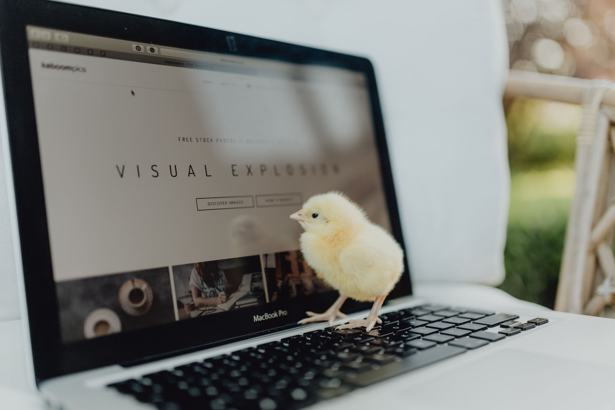 Newborn Chick on laptop